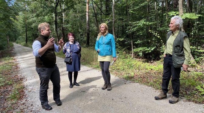 Der Reichswald im Klimawandel